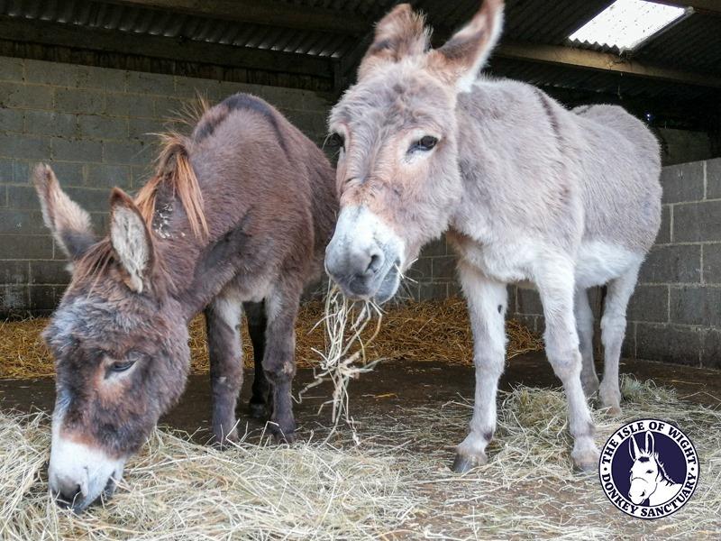 The Isle of Wight Donkey Sanctuary donkeys